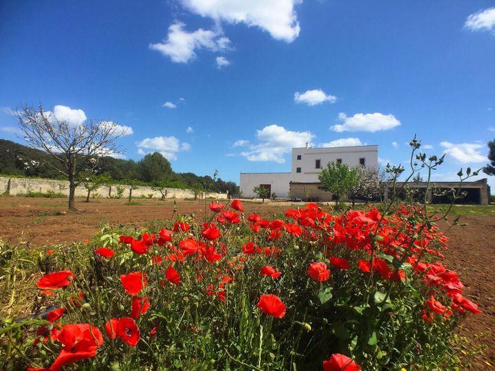 Primavera in Masseria