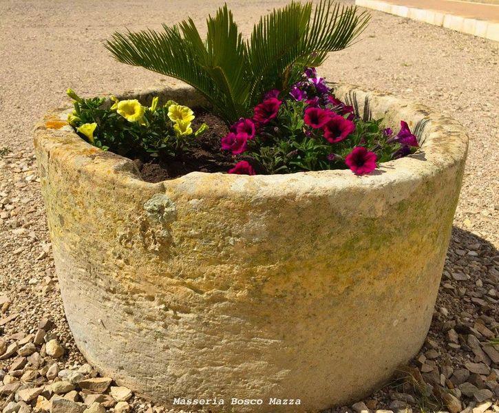 """Una vecchia """"pila"""" in pietra leccese utilizzata come fioriera..."""