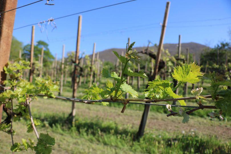 Bellissima mattinata nei Colli Euganei - Sole Natura Vino ;)