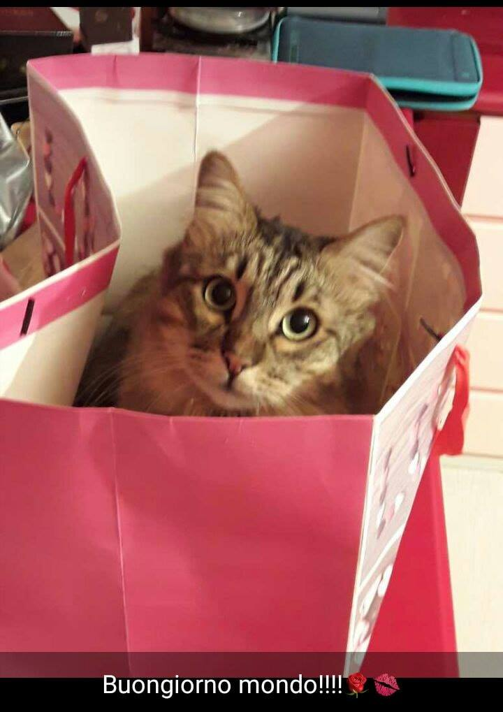 Oggi,17 febbraio, è la giornata mondiale del gatto! Un augurio speciale di una buona domenica da parte del nido l'arcobaleno e ....del mio micio!💙💛🧡❣