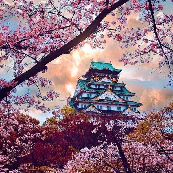 Il castello di Osaka! 🇯🇵  Buongiorno e buon inizio settimana a tutti voi!
