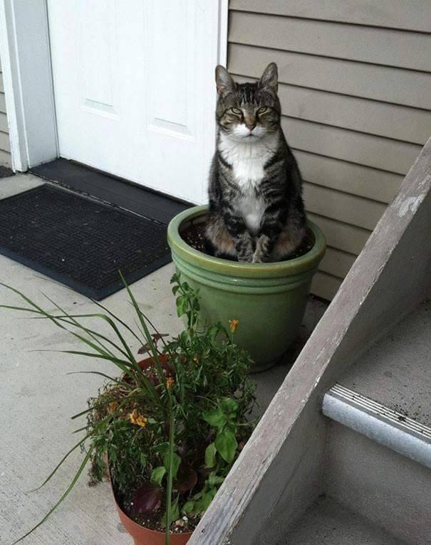 Gatti da giardino